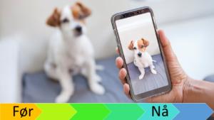 Hund blir tatt bilde av med mobilen